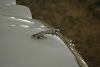 1985 Jaguar XJ6 pictures and wallpaper