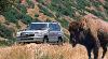 2006 Toyota Land Cruiser image.