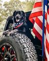 Jeep Brand Announces #Jeeptopcanine Winner, Bear, On National Dog Day