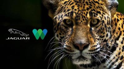 Jaguar North America Teams Up With The Wildlife Conservation Society To Raise Awareness Of The Big Cat For International Jaguar Day